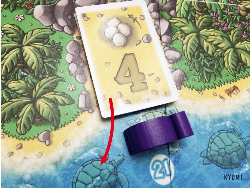 ウミガメの島-写真-カード獲得